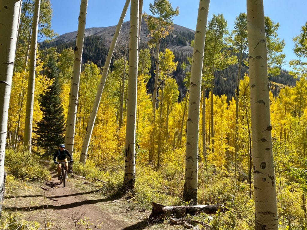 A man on a mountain bike rides through a forest trail surrounded by aspen trees with mountains in the distance